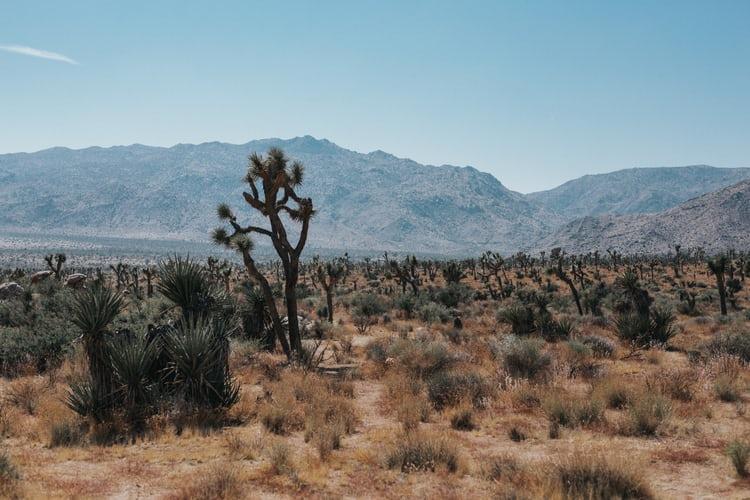 Quiet Garden Retreat: Journey into the Desert